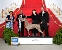 Weimaraner 2017 Nationals